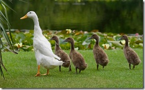 Leadership: Ducks in a Row